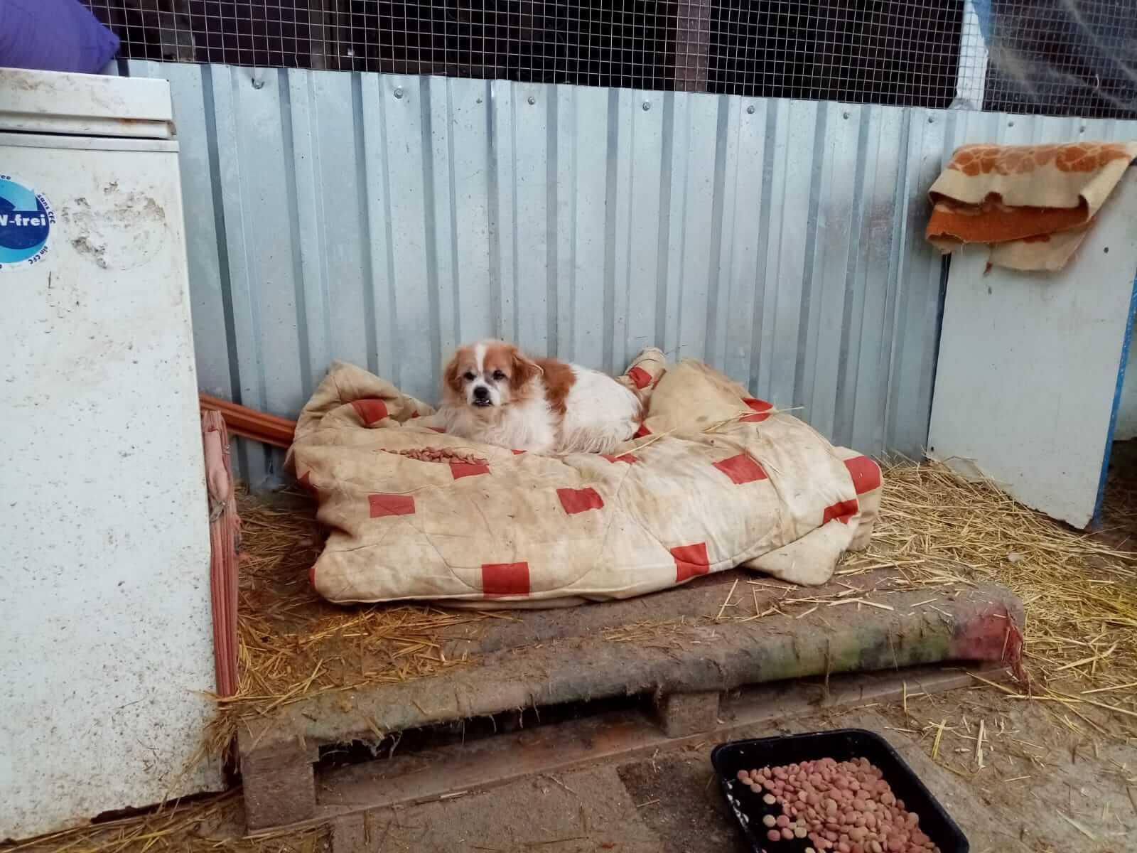 Animal Protection through veterinary